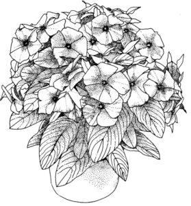 coloriage de fleur a imprimer pour adulte de la catégorie coloriage fleur