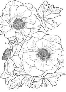 coloriage fleurs adulte gratuit de la catégorie coloriage fleur