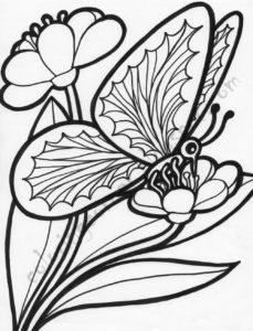 coloriage papillon avec fleur de la catégorie coloriage papillon