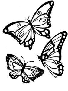 coloriage papillon simple a imprimer de la catégorie coloriage papillon